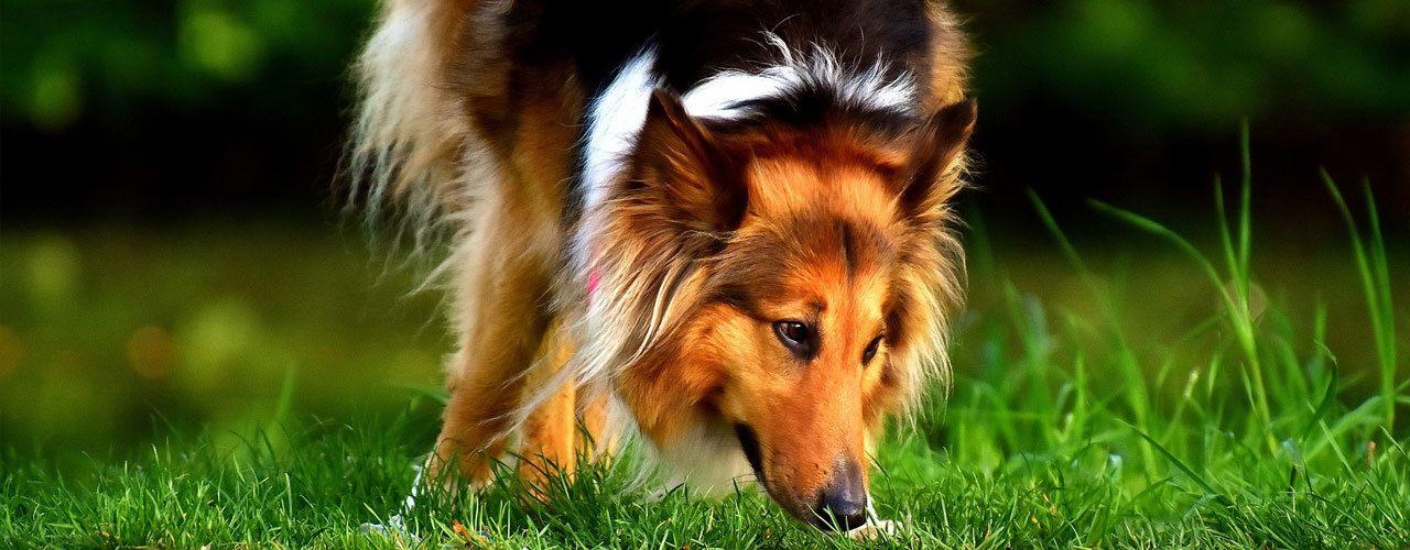 Cuidado del pelo perros